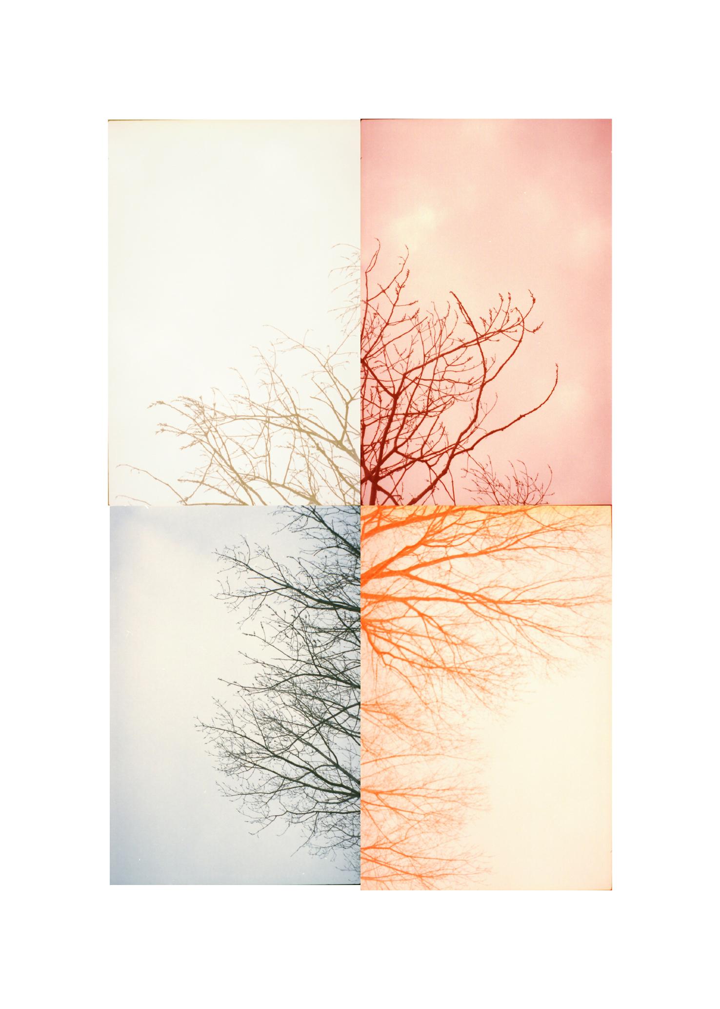 treetops01